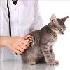 Ветеринарные клиники в Маслянино